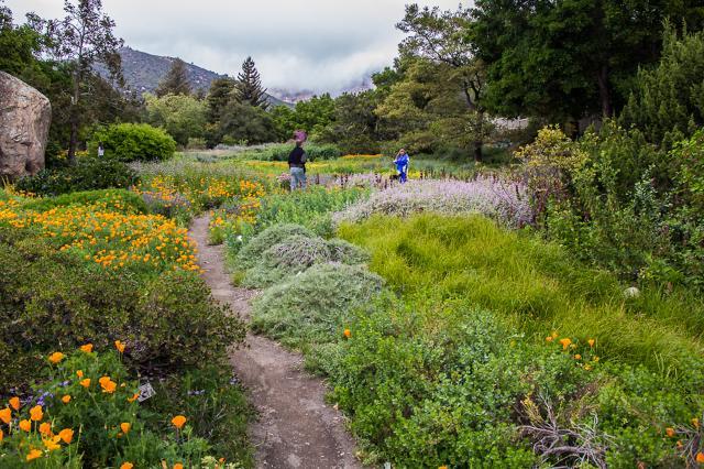 general information - Santa Barbara Botanic Garden